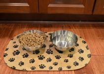 5 Best Dog Placemats (Reviews Updated 2021)