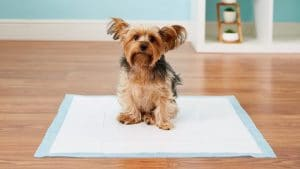 5 Best Dog Potty Pad Reviews