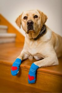 5 Best Dog Sock Reviews