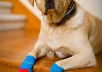5 Best Dog Socks (Reviews Updated 2021)