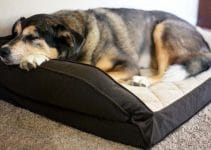 38 Best Orthopedic Dog Beds (Reviews Updated 2021)