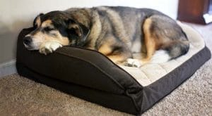 5 Best Orthopedic Dog Bed Reviews