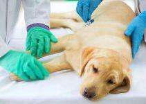 Do You Need Pet Health Insurance?