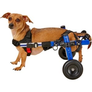 Handicappedpets Dog Wheelchair