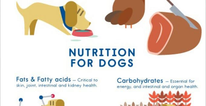 What Nutrients Do Dogs Need