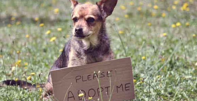 What Are The Benefits Of Adopting A Dog