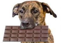 Why Chocolate Is Poison For Dogs