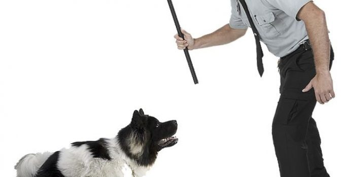 Why You Shouldn't Punish Your Dog