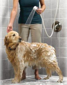 Why Your Dog Hates Bathing