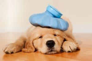 Do Dogs Get Headaches