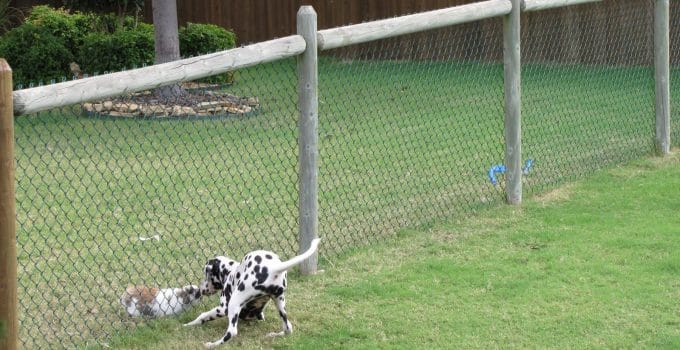 How To Protect Your Home With Pet Fencing
