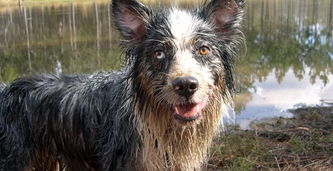 Understanding Why Your Dogs Is Smelly, Even After A Bath