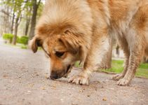 When to Call the Vet When Your Dog Eats Something Strange