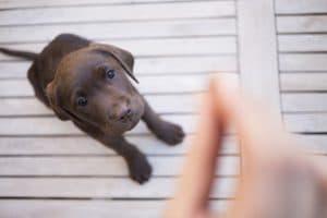 5 Best Dog Jerky Treat Reviews