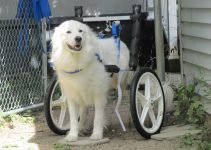 5 Best Dog Wheelchairs and Handicap Supports (Reviews Updated 2021)