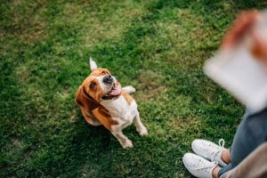 Best Strategies for Using Dog Treats for Training