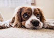 How To Cope With Guilt After Putting A Beloved Dog To Sleep