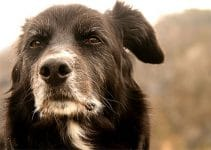 How To House Train An Older Dog