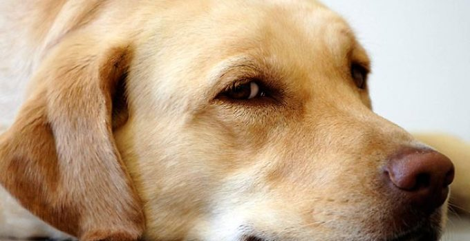 How To Identify A Benign Skin Tumor On Your Dog's Skin