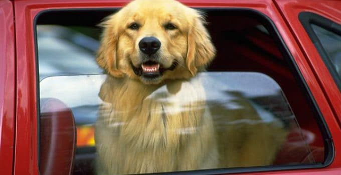 How To Protect Your Car From Sharp Dog Claws