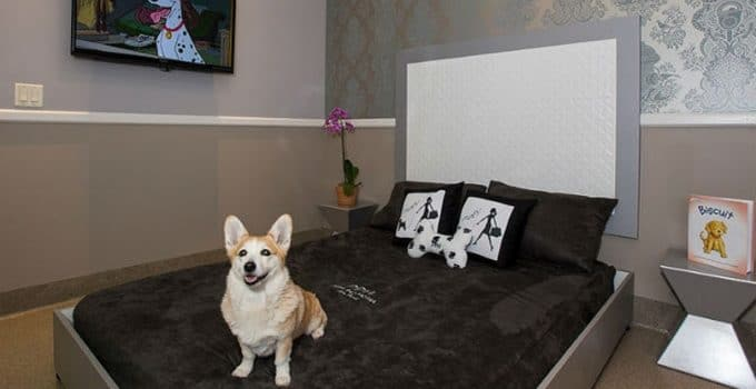 Is There Any Danger Of Disease From Pet Hotels