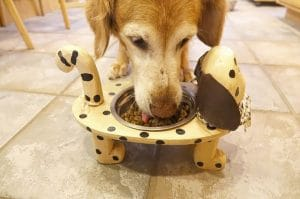 What Type Of Food Should I Feed My Diabetic Dog