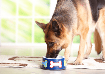 What Is A Low Fat Diet For Dogs