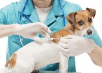 What To Know About Vaccinations For Pregnant Or Nursing Dogs