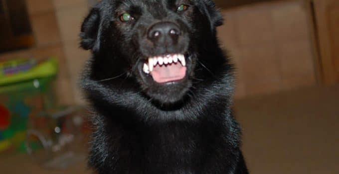 What To Do When Your Dog Shows Aggression Toward Other Dogs