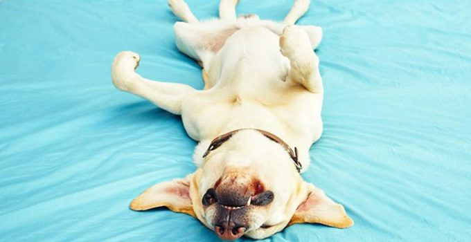 Why Do Some Dogs Snore