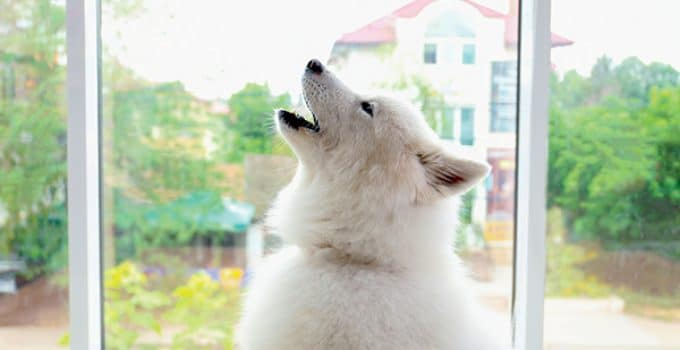 Why Dogs Bark, Whine, And Howl
