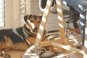 Why It's A Great Idea To Allow Dogs In The Workplace