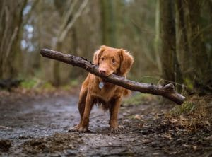 Small Dog Chewing A Tree Limb In Woods