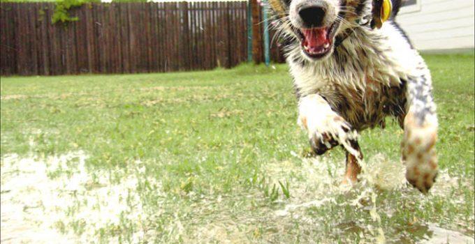 5 Reasons You Should Have A Smart Dog Door