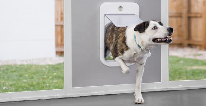 5 Types Of Dogs That Benefit From A Dog Door