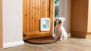 Why Smart Homes Are Installing Smart Doggy Doors