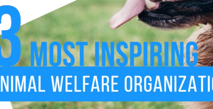 Us Animal Welfare Organizations