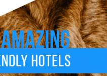 14 Amazing Pet Friendly Hotels
