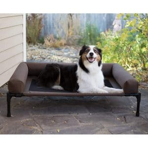 Best Elevated Dog Bed Reviews