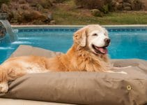 Best Waterproof Dog Bed Reviews