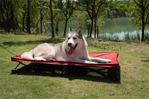 Yephho Large Elevated Folding Pet Bed