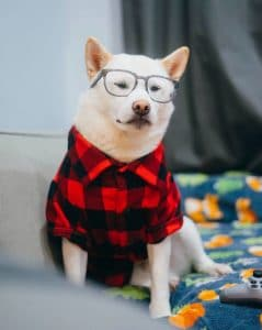Best Dog Clothing Reviews