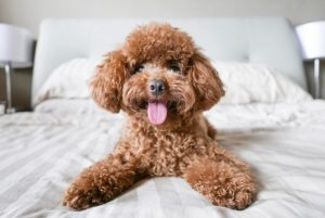 Best Dog Conditioner Reviews