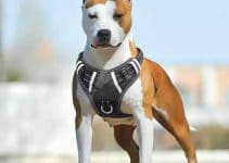 11 Best Large Dog Harnesses (Reviews Updated 2021)