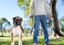 21 Best Dog Muzzles (Reviews Updated 2021)