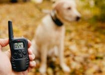 24 Best Dog Training Collars (Reviews Updated 2021)