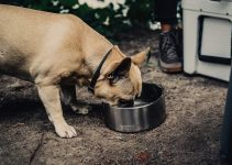 Best Dog Water Bowl Reviews
