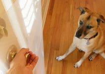 7 Best Door Scratch Protector for Dogs (Reviews Updated 2021)