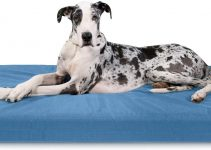 Best Heavy Duty Dog Bed Reviews