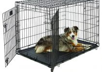 25 Best Large Dog Crates (Reviews Updated 2021)